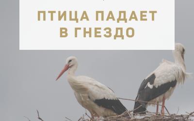 """Активация """"Птица падает в гнездо"""" 15 июля 2021 года"""