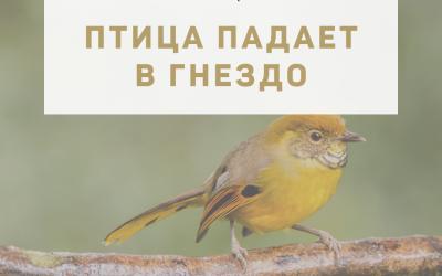 """Активация """"Птица падает в гнездо"""" 02 сентября 2021 года"""