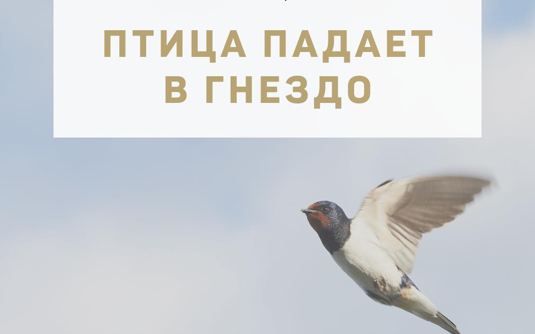 """Активация """"Птица падает в гнездо"""" 25 мая 2021 года"""