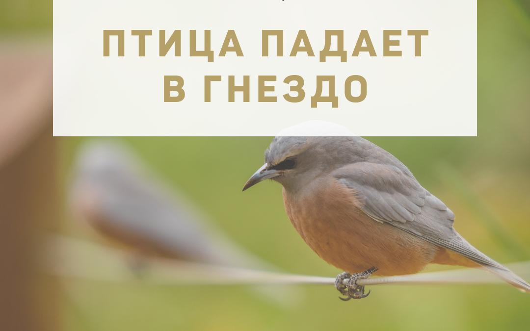"""Активация """"Птица падает в гнездо"""" 04 июля 2021 года"""