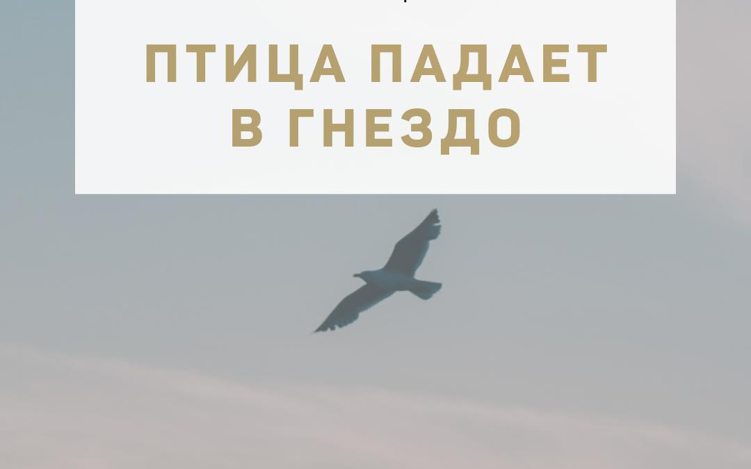 """Активация """"Птица падает в гнездо"""" 07 октября 2021 года"""