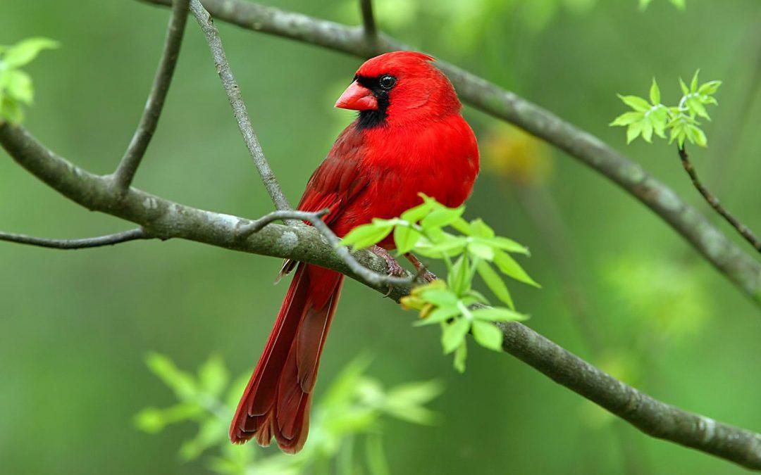 """Активация """"Птица падает в гнездо"""" 10 мая 2020 года"""