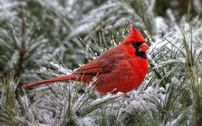 """Активация """"Птица падает в гнездо"""" 17 января 2019 года"""