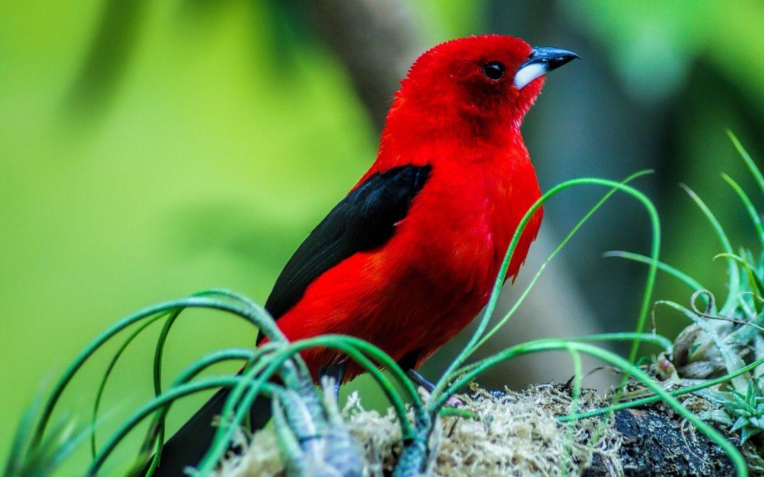 """Активация """"Птица падает в гнездо"""" 26 июля 2019 года"""