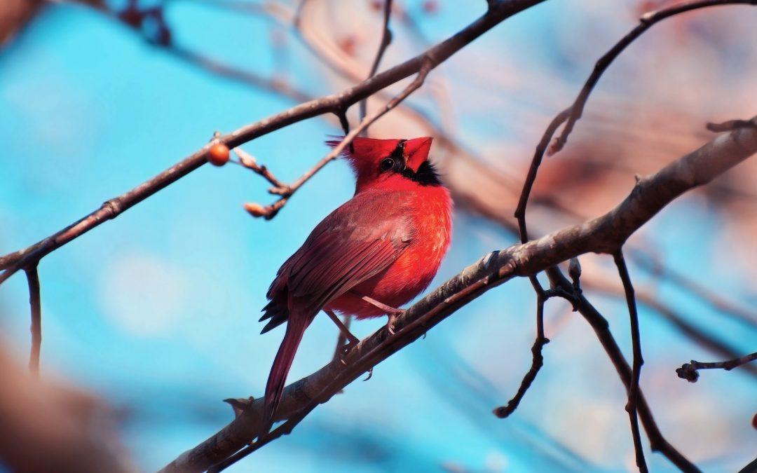 """Активация """"Птица падает в гнездо"""" 02 августа 2018 года"""