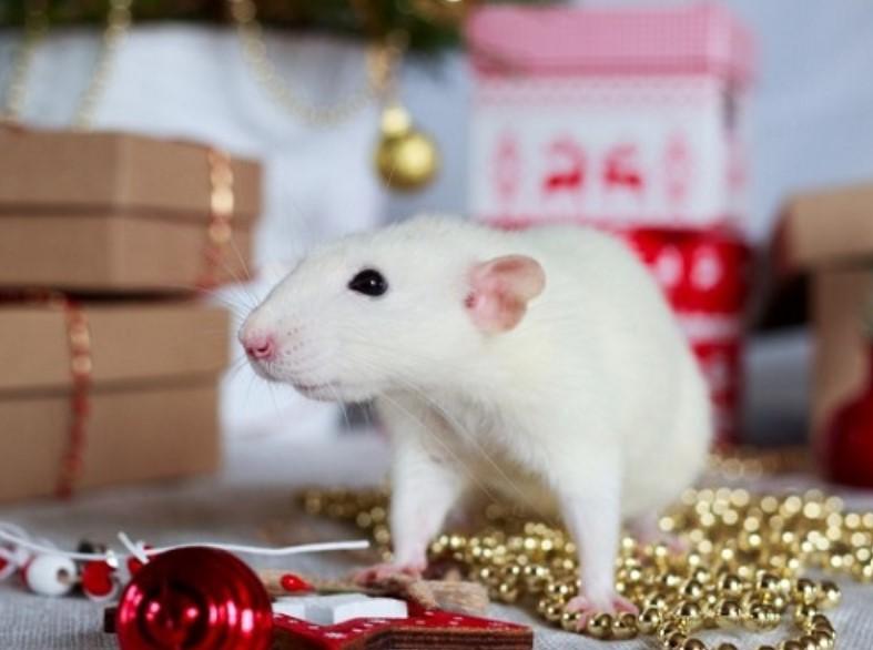 С новым годом Металлической Крысы