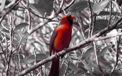 """Активация """"Птица падает в гнездо"""" 10 февраля 2020 года"""