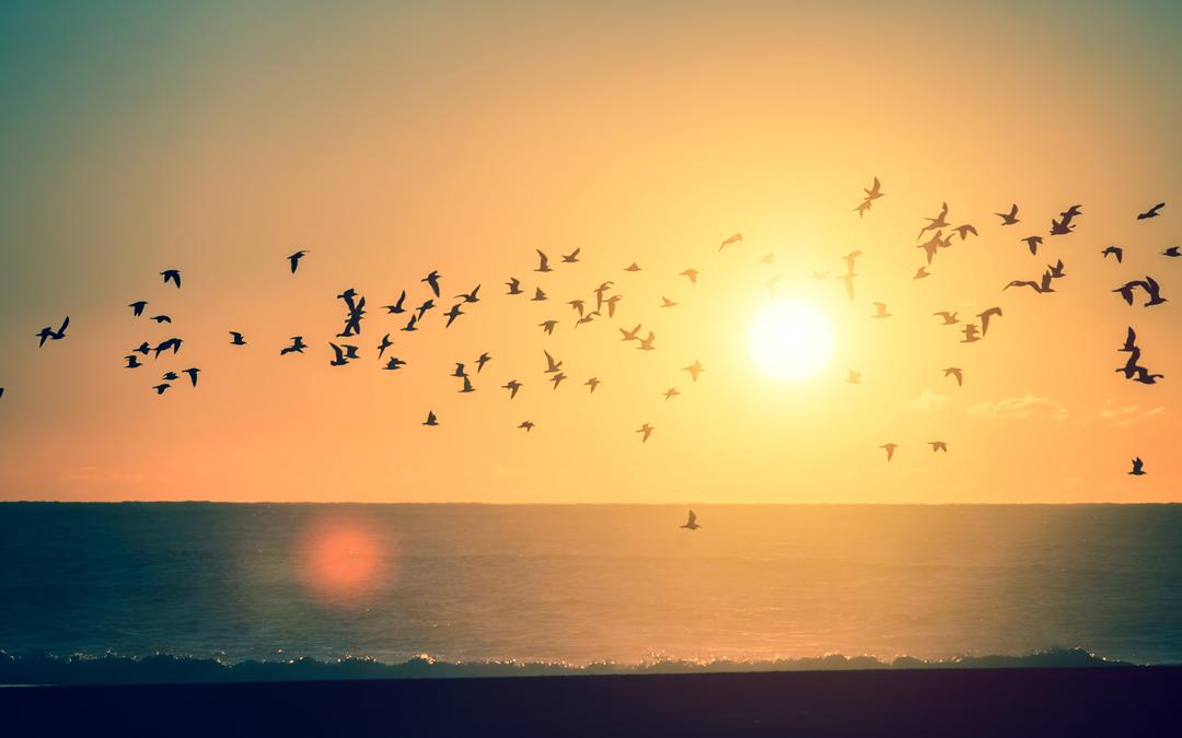 """Активация """"Птица падает в гнездо"""" 23 октября 2020 года"""